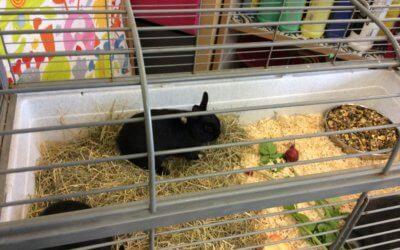 Baby Rabbits Visit Foundation