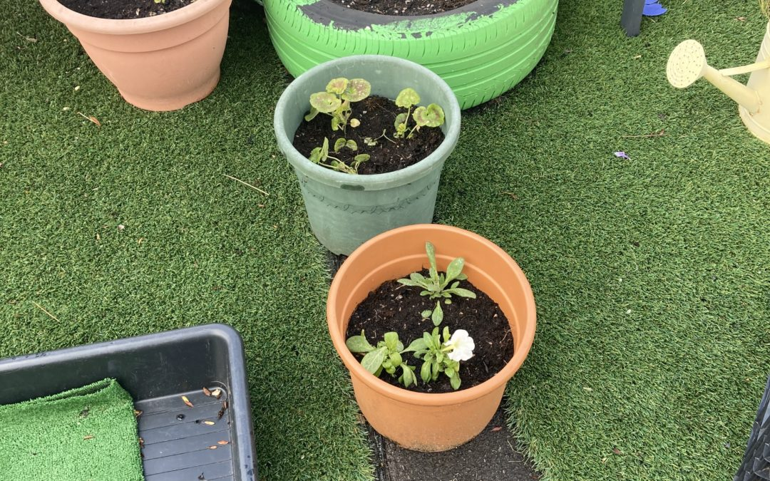 We have been planting outdoors in our Early Years garden